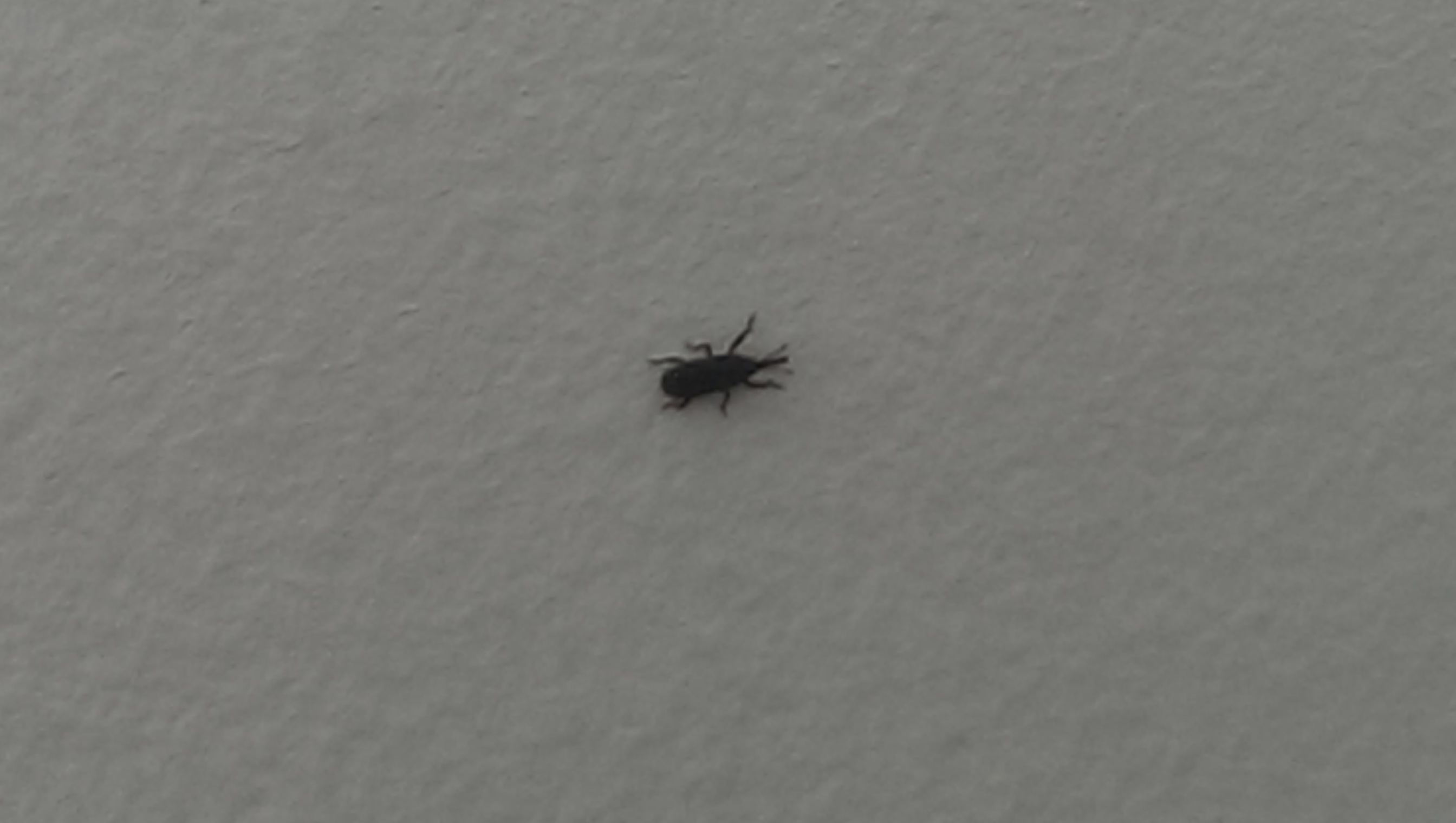 Trying To Identify Black Ant Like Bugs Found Occasionally In My Apartment 162870 Ask Extension