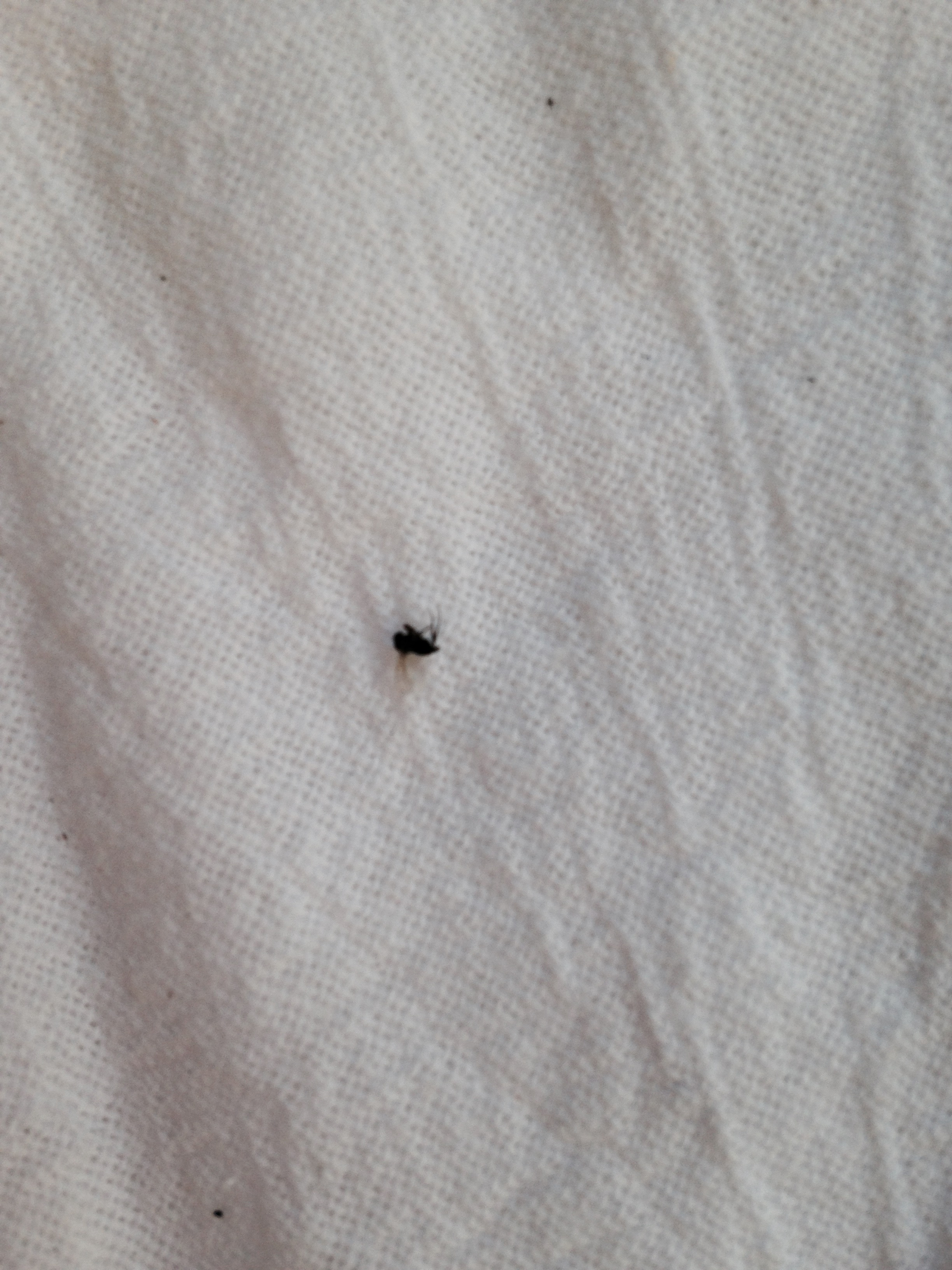 Tiny Black Bugs With Wings That Gather Around Window Sills Help 232518 Ask Extension